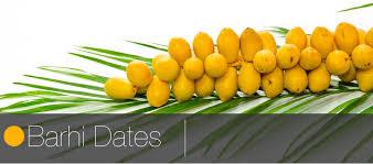fresh dates fruit barhi dates fruit link fresh produce