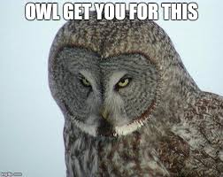 Funny Owl Meme - owl pun imgflip