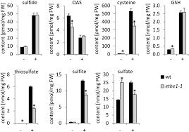 the mitochondrial sulfur dioxygenase ethylmalonic encephalopathy