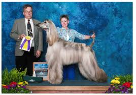 afghan hound arizona news