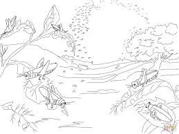 plague of locusts coloring page free printable coloring pages