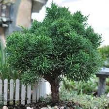 miniature trees plants at miniature gardening miniature