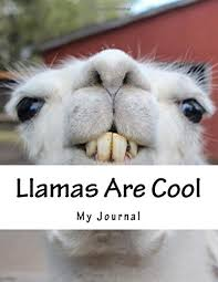 Alpaca Memes - llama rama hilarious llama and alpaca memes images and jokes