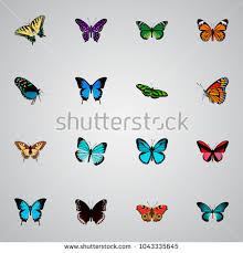 ulysses butterfly stock images royalty free images vectors