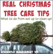 real tree care tips from set up to clean up
