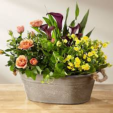 plant delivery blooming plant delivery gardenia live plant delivery by ftd