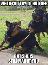 T Dog Meme - 25 dog meme that will definitely brighten your day sayingimages com