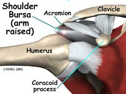 Tendons In The Shoulder Diagram Rotator Cuff Tears Houston Methodist