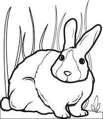 free printable bunny rabbit coloring kids