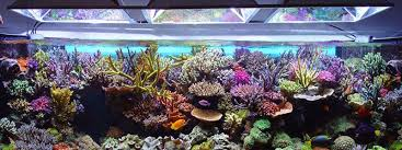 led aquarium lights for reef tanks best led aquarium lighting planted reef tanks 2018 reviews
