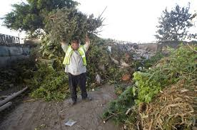 christmas tree recycling in orange county cities u2013 orange county