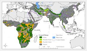 leopard panthera pardus status distribution and the research