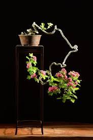 pot bonsai design 2796 best bonsai e ikebana images on pinterest bonsai trees