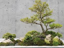 bonsai garden an incredible charm in miniature scale