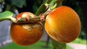 Best Fruit Trees For North Carolina - what fruit trees are good for indiana garden guides