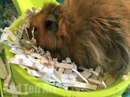 where to shred papers uses for shredded paper ted s