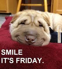 Dog Smiling Meme - funny dogs google search funny animals pinterest dog memes