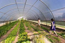 farm and table albuquerque the best places to eat in albuquerque finding the universe