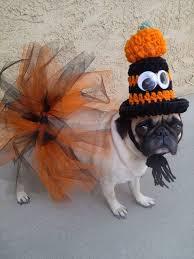 Halloween Costumes Dogs 115 Dog Halloween Costumes Images Dog
