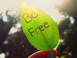 being free quotes quotes about being free sayings about being free