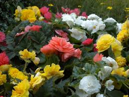 the flowers of summer at the easiest annuals to plant for color all summer diy