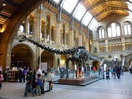 reportage au museum of natural history les dinosaures
