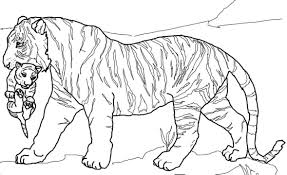 mother tiger carrying cub coloring pages for kids ge4 printable