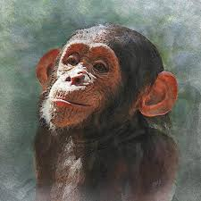 painting chimpanzee little chimp painting by philip white