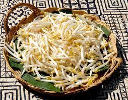 comment cuisiner les pousses de soja soja planter et cultiver ooreka