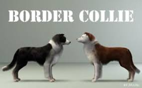 sims 3 australian shepherd template mod the sims four border collies for your sims