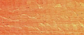 Powder Post Beetles In Hardwood Floors - how to define a classic wood floor whole log lumber