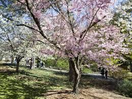 Prospect Park Botanical Garden Botanic Garden Attractions In Prospect Park