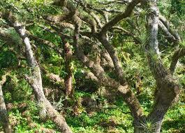tree tops park florida hikes