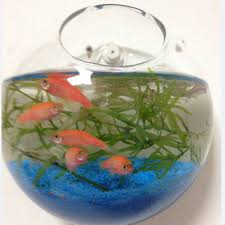 best wall fish tank products on wanelo