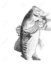 a hand drawn pencil sketch of a hand holding a large mouth bass