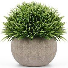 Topiary Plants Online - potted topiary floral décor ebay