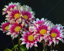 Nice Flowers Nice Flowers Flower Arangements Flowers Pixoto