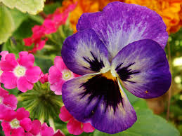 Pictures Of Beautiful Flowers In The World - top ten most beautiful flowers asveth