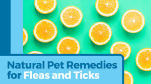 home remedies for flea and tick control petmd petmd