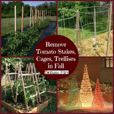 tomato garden fall cleaning checklist 2 remove and clean supports
