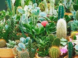 cactus and succulents diy