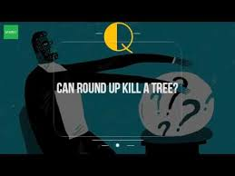 can round up kill a tree youtube