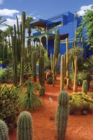 215 best suculentas dzityá images on pinterest gardening