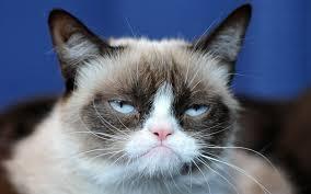 Success Cat Meme - entrepreneurial success grumpy cat style