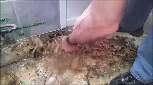 Rotten Bathroom Floor - rotted bathroom floor youtube