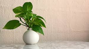 best plants for air quality the ten best houseplants for improved air quality according to nasa