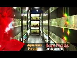 Aquascape Online Aquarium Paradise Www Aquascapeonline Com Christmas Tv
