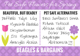 beautiful but deadly easter flowers for pets