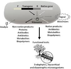 frontiers technological microbiology development and