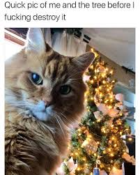 Funny Christmas Cat Memes - quick selfie of me with the tree before i destroy it cat